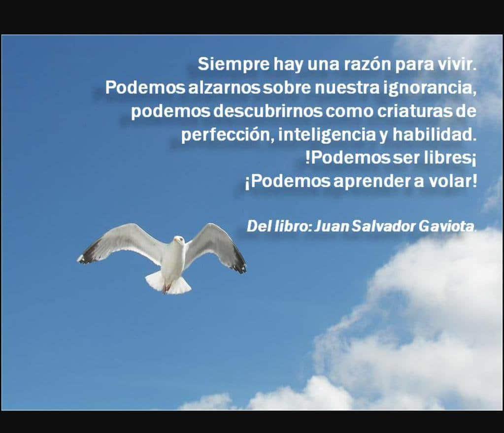 JUAN SALVADOR GAVIOTA: características, Análisis, personajes