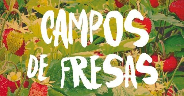 campos-de-fresas-1