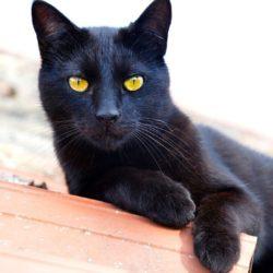 El gato negro:  características, análisis, personajes,   y mucho  más