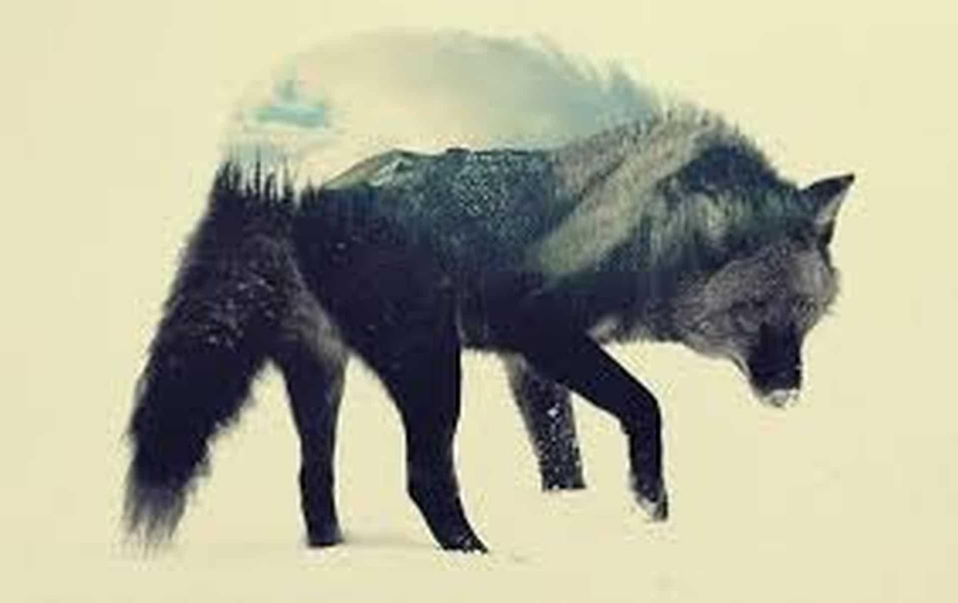 el lobo estepario-5